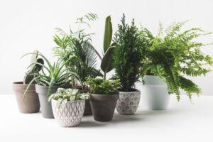 Forskellige stueplanter